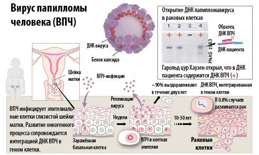 Канцерогены, причины возникновения рака, риск развития