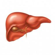 Рак печени: симптоми, признаки, лечение, прогноз